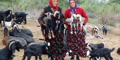 Adana Damızlık Koyun Kuzu Birliği