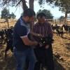Saimbeyli İlçesinde Islah Projesindeki Keçilerin küpeleri Teknikerlerimiz tarafından takıldı.