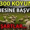 300 koyun projesi başvuru sayfası - 300 koyun şartları nelerdir?